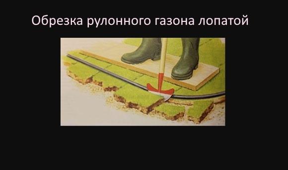 Обрезка рулонного газона лопатой