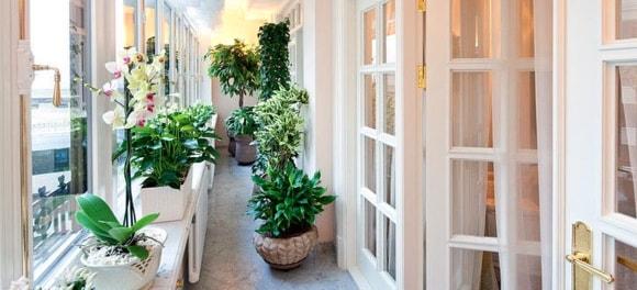 Идеи расположения цветов на балконе