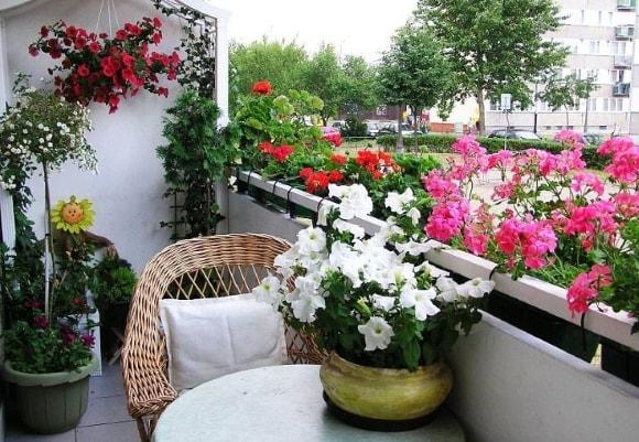 Варианты декорирования балкона цветами фото
